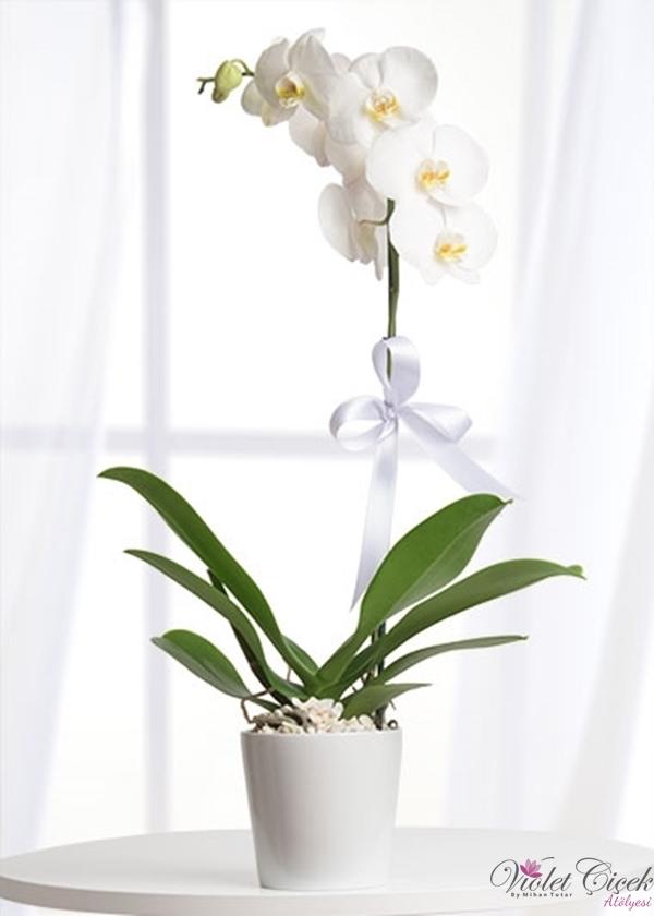 Seramikte Beyaz Orkide