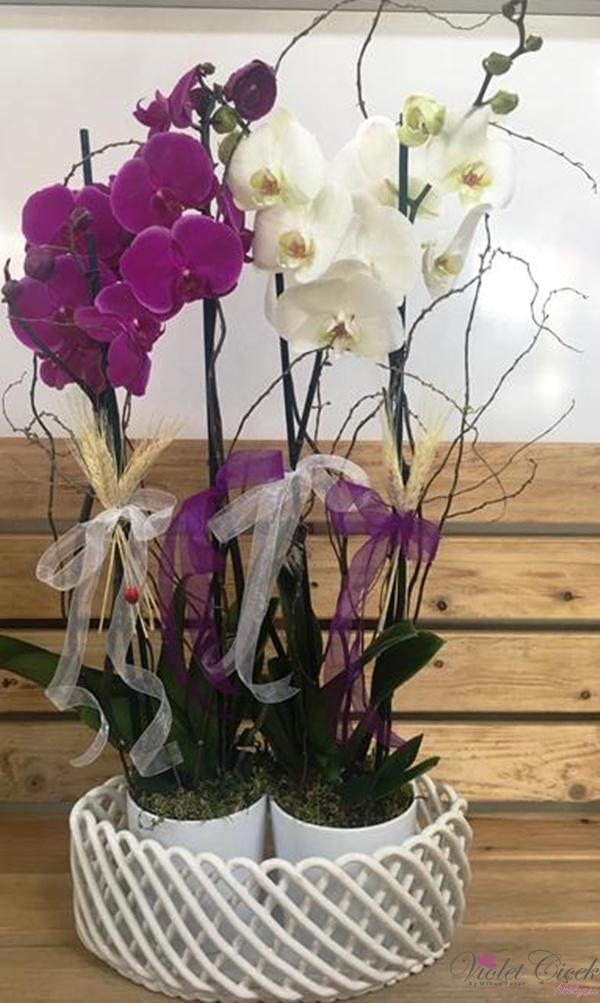 Özel Seramikte Orkideler Renkli