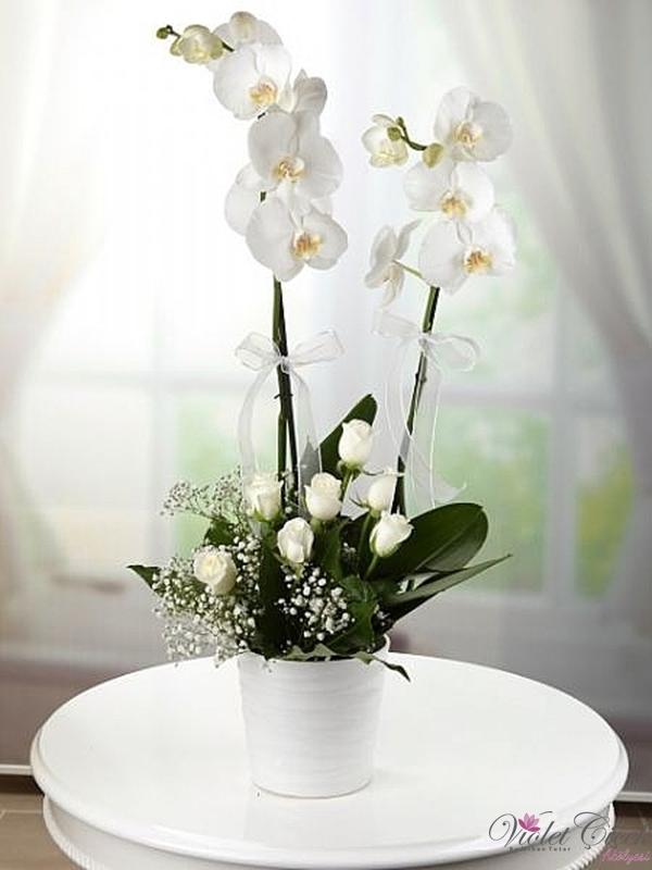 Seramikte Beyaz Orkide ve Beyaz Güller