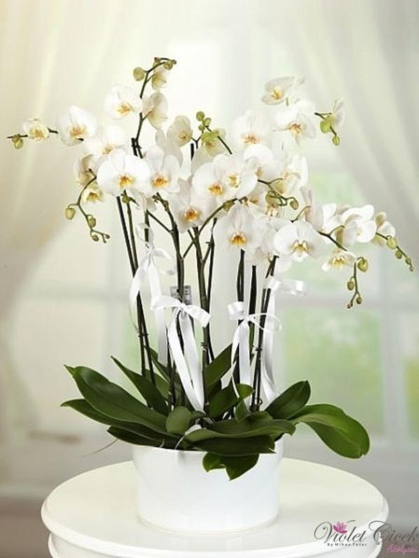 Seramik Vazoda 8 Dal Beyaz Orkide